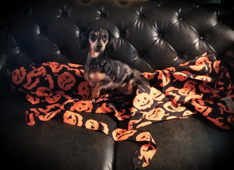 pumpkinkween (1)